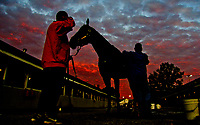 LOUISVILLE, KENTUCKY - May 02: A horse gets a bath at sunrise during Kentucky Derby and Oaks preparations at Churchill Downs on April 30, 2017 in Louisville, Kentucky. (Photo by Sydney Serio/Eclipse Sportswire/Getty Images)