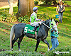 In X Hess before The Delaware Park Arabian Classic Handicap (gr 1) at Delaware Park on 10/5/13