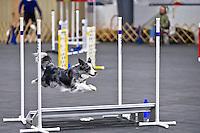 Performance Speedjumping