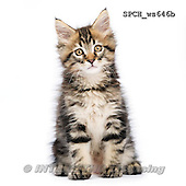 Xavier, ANIMALS, REALISTISCHE TIERE, ANIMALES REALISTICOS, FONDLESS, photos+++++,SPCHWS646B,#A#