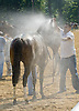Fatastic Song getting a shower at Delaware Park on 5/28/12