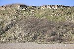 Stable vegetated cliff, Dunwich beach and cliffs, North Sea coast, Suffolk, East Anglia, England