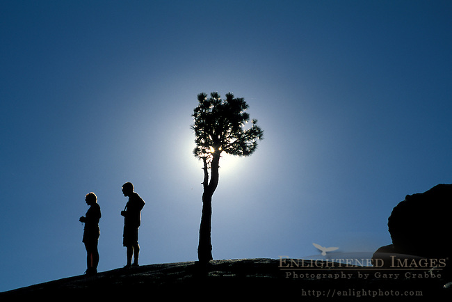 Tourists, Jeffrey Pine, sun, and blue sky at Olmsted Point, High Sierra, Yosemite National Park, California