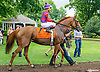 Swear By It before The Robert G. Dick Memorial Stakes (gr 3) at Delaware Park on 7/9/16