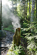 Steaming tree stump along the Ammonoosuc Ravine Trail in the White Mountains, New Hampshire USA during the summer months.