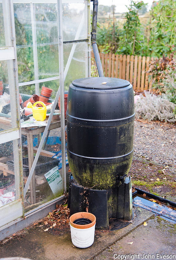Plastic barrel for catching rain water off a greenhouse in a garden, Bouldon, Ludlow, Shropshire.