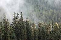 Mist shrouded forest, Tongass National Forest, Southeast, Alaska