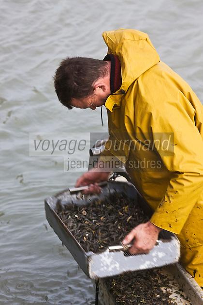 Europe/France/Picardie/80/Somme/Baie de Somme/Le Hourdel: Marin triant sa pêche sur un bateau de pêche - Sauterellier -à la crevette  grise en baie de Somme