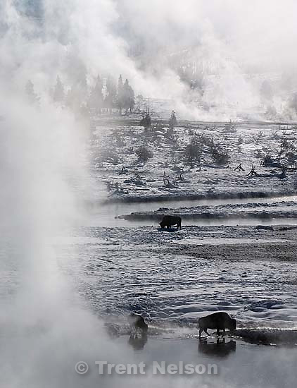 Yellowstone National Park - bison and steam. Snowmobile trip through Yellowstone National Park; 01.22.2004<br />