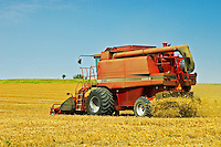 harvesting edible peas<br /> Francis<br /> Saskatchewan<br /> Canada