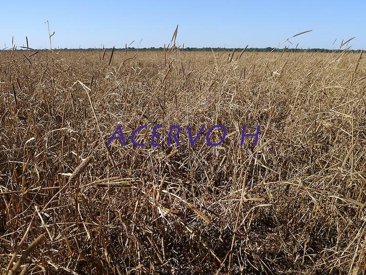 Grandes plantações de soja, milho e algodão cercam o Parque Indígena do Xingu (PIX) .Habitados pelas etnias Aweti, Ikpeng, Kaiabi, Kalapalo, Kamaiurá, Kĩsêdjê, Kuikuro, Matipu, Mehinako, Nahukuá, Naruvotu, Wauja, Tapayuna, Trumai, Yudja, Yawalapiti, o parque ocupa área de 2.642.003 hectares na região nordeste do Estado do Mato Grosso, De acordo com o IMEA - Instituto Mato-Grossense de Economia Agropecuária declarou último dia 7 de agosto de 2015 no informativo 365 divulgou dados novos das safras de soja em MT com a safra 14/15consolidando-se com mais um ano de área e produção recordes. Por meio do método de Sensoriamento Remotoa nova área de 9,01 milhões de hectares apresenta-se 6,8% acima da área da safra 13/14. A produtividade jáconsolidada de 51,9 sc/ha elevou a produção para 28,08 milhões de toneladas. Os novos dados da safra 15/16aumentaram ainda mais a expectativa de safra recorde já esperada no último relatório. A nova área de 9,2 milhõesde hectares baseia-se na conversão de área de pastagem em agricultura observada há algumas safras. Acontinuidade de investimento em tecnologia da nova safra eleva a projeção de produtividade para 52,6 sc/ha,refletindo sobre a produção que deve bater um novo recorde em 2016, de 29 milhões de toneladas. Apesar docrescimento contínuo, a nova temporada deve atingir o menor avanço da produção desde a safra 10/11. <br /> Querência, Mato Grosso, Brasil.<br /> Foto Eric Stoner <br /> 30/ 07/2015