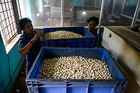 INDIA, Karnataka, Moodbidri, cashew processing factory, imported nuts from africa are processed for export / INDIEN, Fabrik fuer Verarbeitung von aus Afrika importierten Kaschunuessen