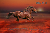 Bob, ANIMALS, REALISTISCHE TIERE, ANIMALES REALISTICOS, collage, horses, photos+++++,GBLA3555,#a#