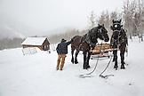 USA, Colorado, Aspen, wrangler Mike Lewindowski gets his horses ready for a sleigh ride, Pine Creek Cookhouse, Ashcroft