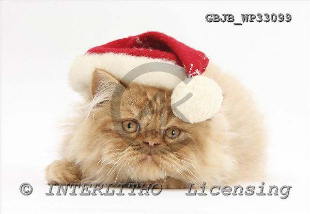 Kim, CHRISTMAS ANIMALS, photos+++++,GBJBWP33099,#xa# stickers