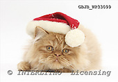 Kim, CHRISTMAS ANIMALS, photos+++++,GBJBWP33099,#xa# stickers