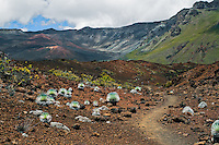 Hiking trails in the crater of HALEAKALA NATIONAL PARK on Maui in Hawaii are often seen with Silversword plants
