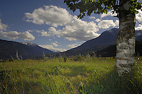 Alpine meadows framed by tree branches overlooking mountains, Imst district, Austria.
