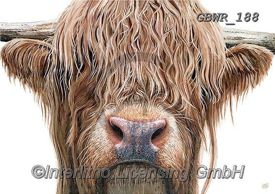 Simon, REALISTIC ANIMALS, REALISTISCHE TIERE, ANIMALES REALISTICOS, innovative, paintings+++++OliviaDeRivaz_HighlandCow,GBWR188,#a#, EVERYDAY