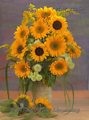 Marek, FLOWERS, BLUMEN, FLORES, photos+++++,PLMPTLO69,#f# sunflowers