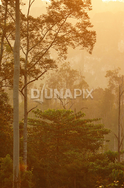 Ethereal sunset from the forest canopy east of Lake Tebo,