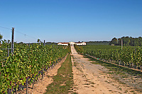 Vineyards, tractor road and the winery in the distance - Chateau de la Tour (or Clos de La Tour), Bordeaux, now Pey la Tour