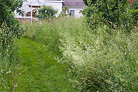 Naturalistic garden with mowed grassy wide pathway, natural meadow, allowing grass to grow and seed, near house for an organic wild look