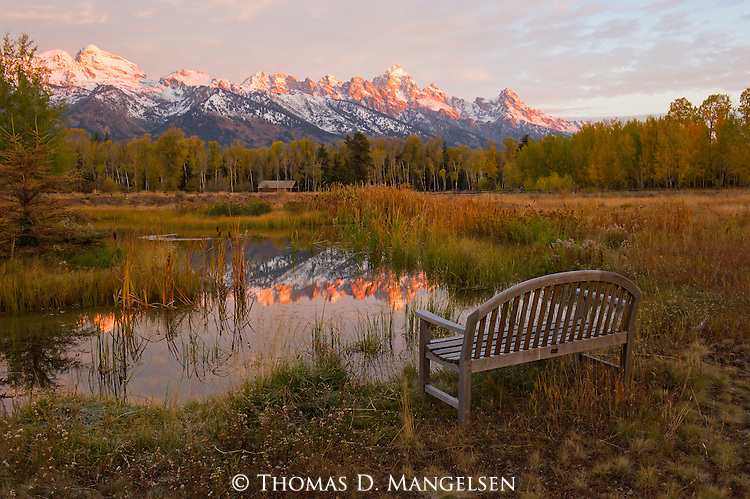 In the early morning, rose tinted light, the first snows of autumn on the Teton Range reflect in the still water of a pond in Northwest Wyoming.