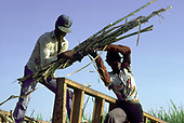 Haitian migrant cane-cutters, Dominican Republic.