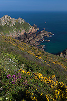 Royaume-Uni, îles Anglo-Normandes, île de Guernesey, Saint-Martin: Fermain bay  // United Kingdom, Channel Islands, Guernsey island, St-Martin  : Fermain bay