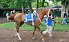 RB Big N Rich before The Buzz Brauninger Arabian Distaff Handicap (grade 1) at Delaware Park on 9/5/15
