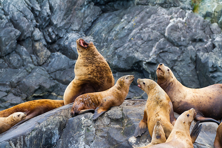 The Inian Islands, near where the Pacific Ocean comes into the northern end of Alaska's inside passage.  This area is very rich with nutrients and a variety of marine mammals, such as sea lions, can be found here.