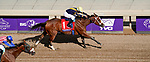 November 2, 2019 : Covfefe, ridden by Joel Rosario, wins the Breeders' Cup Filly & Mare Sprint on Breeders' Cup Championship Saturday at Santa Anita Park in Arcadia, California on November 2, 2019. John Voorhees/Eclipse Sportswire/Breeders' Cup/CSM