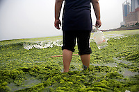 A boy stands ankle-deep in algae and water as he looks over Qingdao Bay from the Number 6 Bathing Beach in Qingdao, Shandong, China...Qingdao is the host of the sailing events for the 2008 Summer Olympics. Algae blooms like this have become common in inland lakes in China, often caused by high pollution in bodies of water.  The city is asking for help and forcing residents to take part in the cleanup effort before the Olympic events..