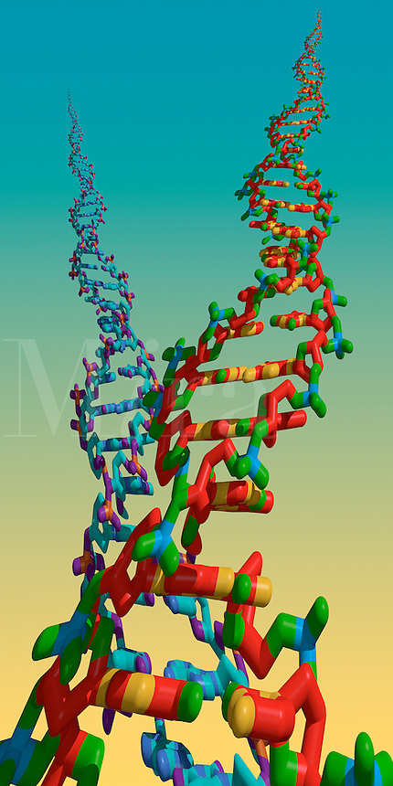 Digital illustration of a DNA double helix  spirals.