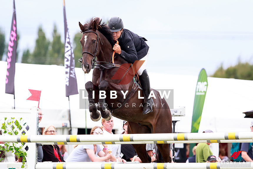 NZL-Stephen Nickalls rides Letino in the Dunstan Nutrition Seven Year Old Horse. Part of the Cortaflex 7yo Breeding Series. 2017 NZL-Horse Of The Year Show. Hastings. Thursday 9 March. Copyright Photo: Libby Law Photography