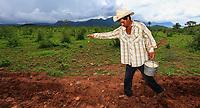 Maiz Organico, Munihuaza Álamos, Sonora