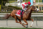 ARCADIA, CA  FEBRUARY 22: #1 Jolie Olimpica, ridden by Mike Smith, is all alone at the start of the Buena Vista Stakes (Grade ll) on February 22, 2020 at Santa Anita Park in Arcadia, CA.  (Photo by Casey Phillips/Eclipse Sportswire/CSM)