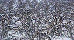 Fruit trees, Methow Valley, Washington, USA<br /> <br /> Sony ILCE-9, FE 24-70mm F2.8 GM lens, f/18 for 1/320 second, ISO 800