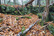 An abandoned cellar hole along the old North and South Road (now Long Pond Road) in Benton, New Hampshire. Based on an 1860 historical map of Grafton County this believed too have been the homestead / farm of John Lathrop.