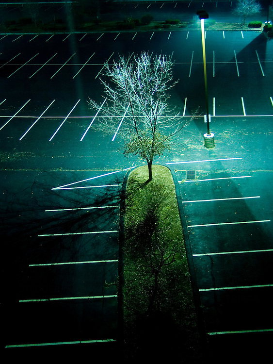 A car park at night with a tree and street lamp