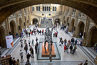 Grossbritannien, England, London, Kensington: im Natural History Museum, Ausstellung eines Diplodocus Dinosaurierskeletts | Great Britain, England, London, Kensington: Central Hall of the Natural History Museum, showing skeleton of a Diplodocus Dinosaur