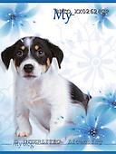 Alfredo, ANIMALS, dogs, photos+++++,BRTOXX02624CP,#a# Hunde, perros