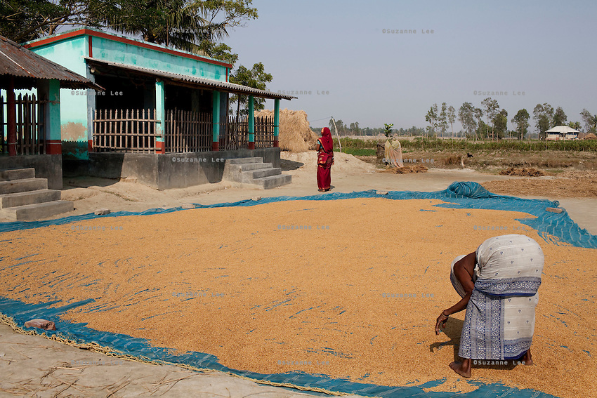 A woman dries her yield outside the Bono Debi/Bono Bibi temple on Gosaba island, Sundarban, West Bengal, India, on 18th January, 2012. A tiger hid in this temple after attacking a woman. Villagers pray to this endemic goddess, known as Bono Debi to Hindus and Bono Bibi to Muslims, to protect them from tigers. Tigers have been known to swim, sometimes underwater, to the village to hunt humans. A successful Royal Bengal tiger breeding program has increased their numbers but decreased the number of husbands. There are now an estimated 3,000 widows in the villages where their husbands, have been killed by tigers. Photo by Suzanne Lee for The National (online byline: Photo by Szu for The National)