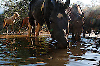 Horses come to a water hole in order of dominance at the Wild Horse Sanctuary where there are 300 horses on 5,000 acres that have been saved.<br />