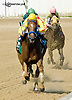 Winning Image running 2nd The Sweet and Sassy Stakes at Delaware Park on 7/12/14