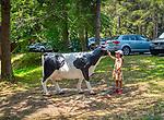 Wysowa-Zdrój, 2019-07-16, (woj. małopolskie) Dziewczynka głaszcząca sztuczną krowę na kempingu w Wysowej.