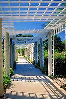 Huntington Gardens, Pasadena, CA, Architectural Wood Garden Trellis