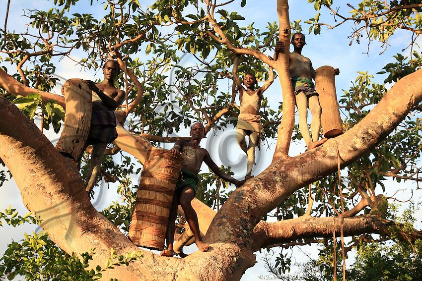 The Banas are polygamous and live very scattered in the bush. Every family has beehives. The young have about a dozen and the elders up to 60 or 80. ///Les Banas sont polygames et vivent très éparpillés en brousse. Chaque famille possède des ruches. Les jeunes en ont une dizaine et les anciens jusqu'à 60, 80.