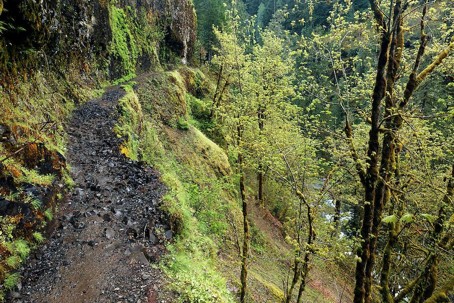 Eagle Creek Trail cut into cliff, Eagle Creek Recreation Area, Columbia River Gorge National Scenic Area, Oregon, USA